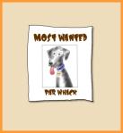 "Par Whack, the ""Most Wanted Dog"""